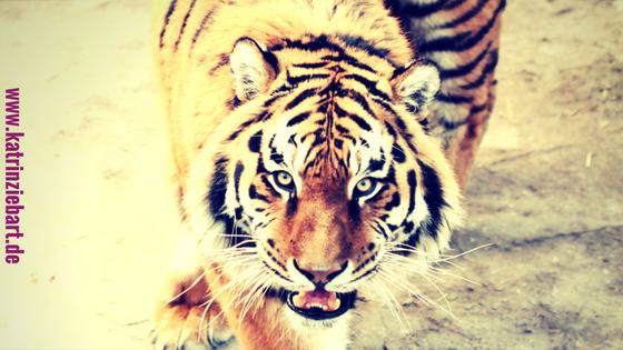 Was ein Tiger (immer noch) mit Deinem Business zu tun hat